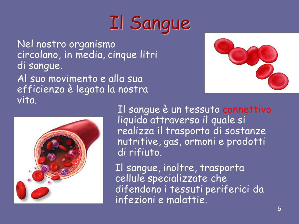 Il Sangue Nel nostro organismo circolano, in media, cinque litri di sangue. Al suo movimento e alla sua efficienza è legata la nostra vita.