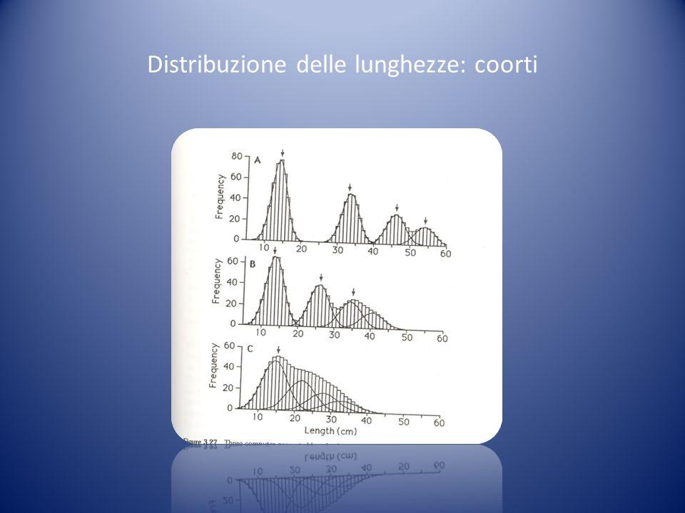 Distribuzione delle lunghezze: coorti