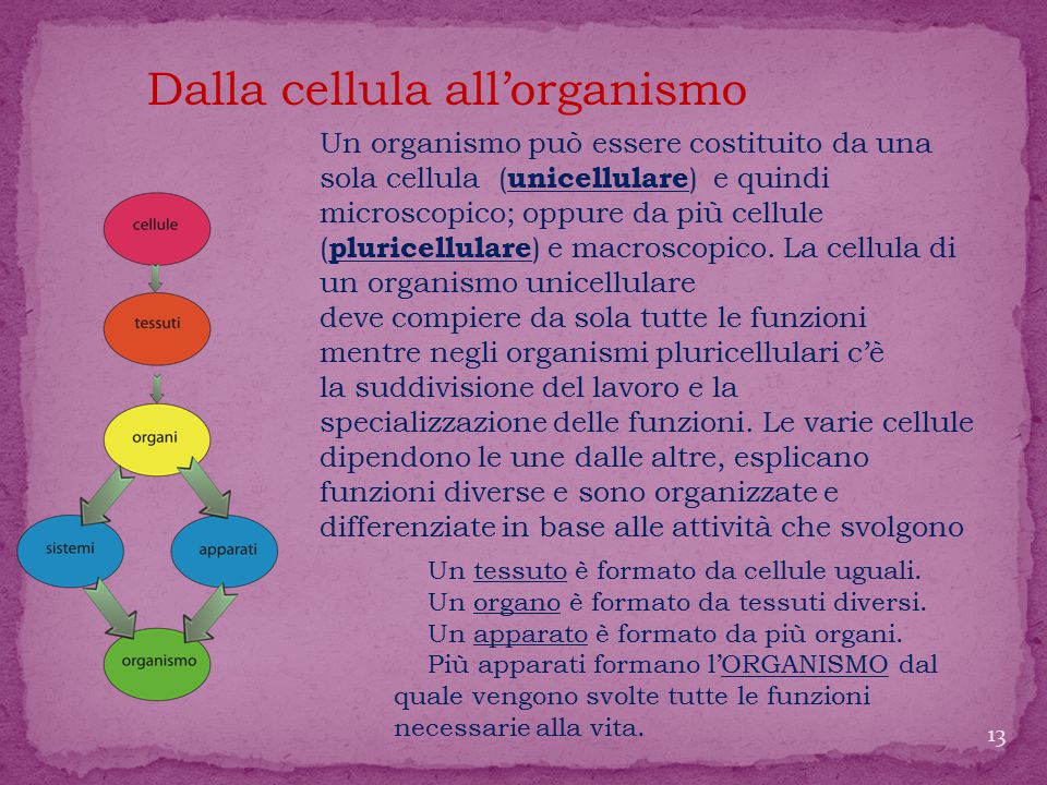 Dalla cellula all'organismo