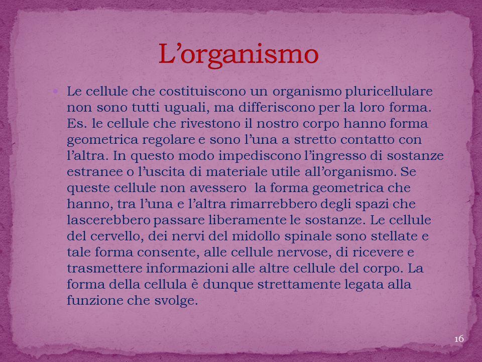 L'organismo