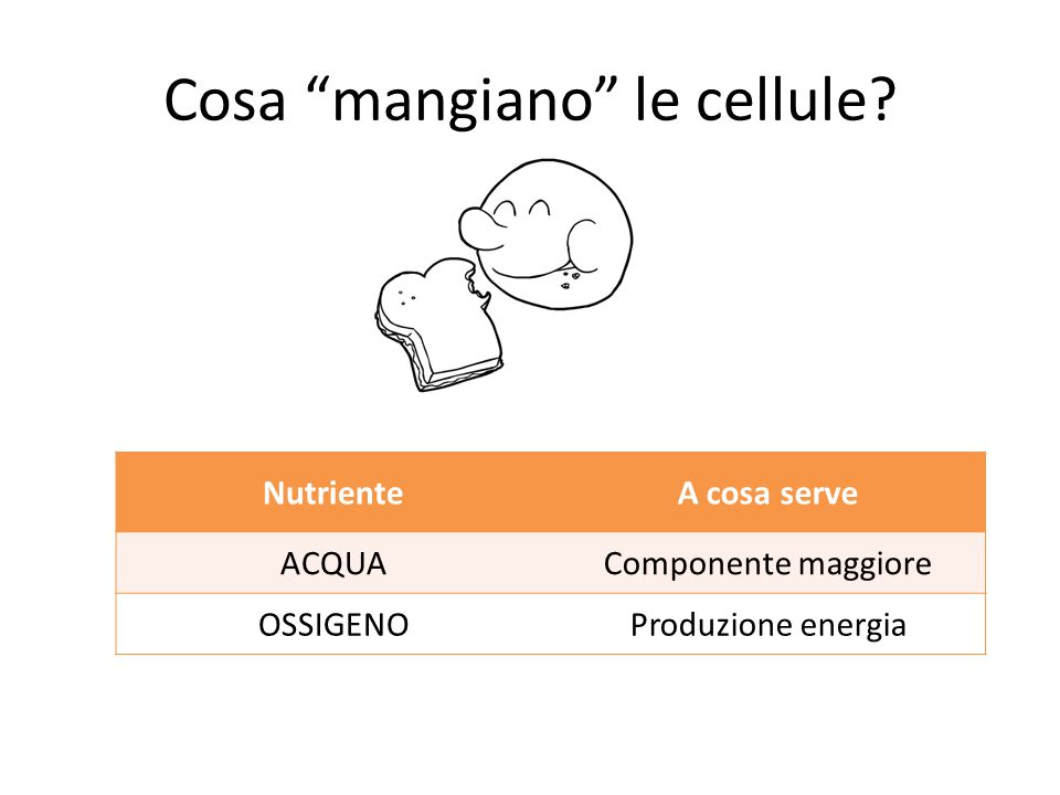Come si osservano le cellule ppt video online scaricare - Cosa mangiano le talpe ...