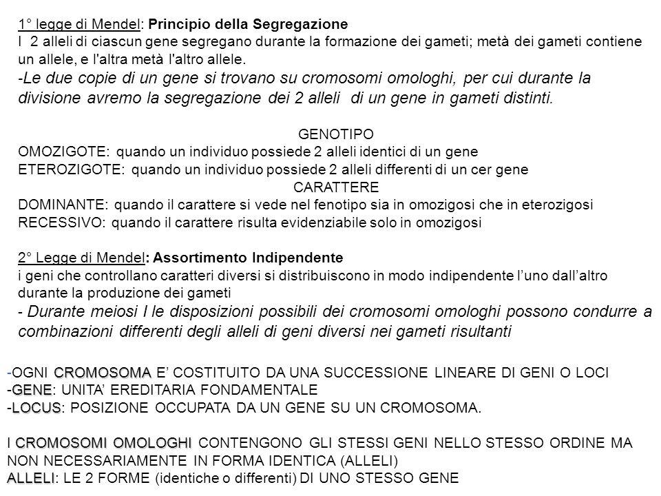1° legge di Mendel: Principio della Segregazione