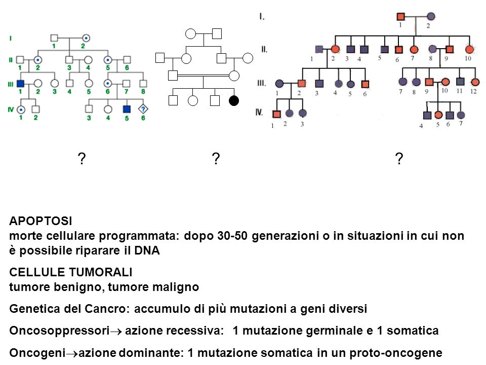 APOPTOSI morte cellulare programmata: dopo 30-50 generazioni o in situazioni in cui non è possibile riparare il DNA