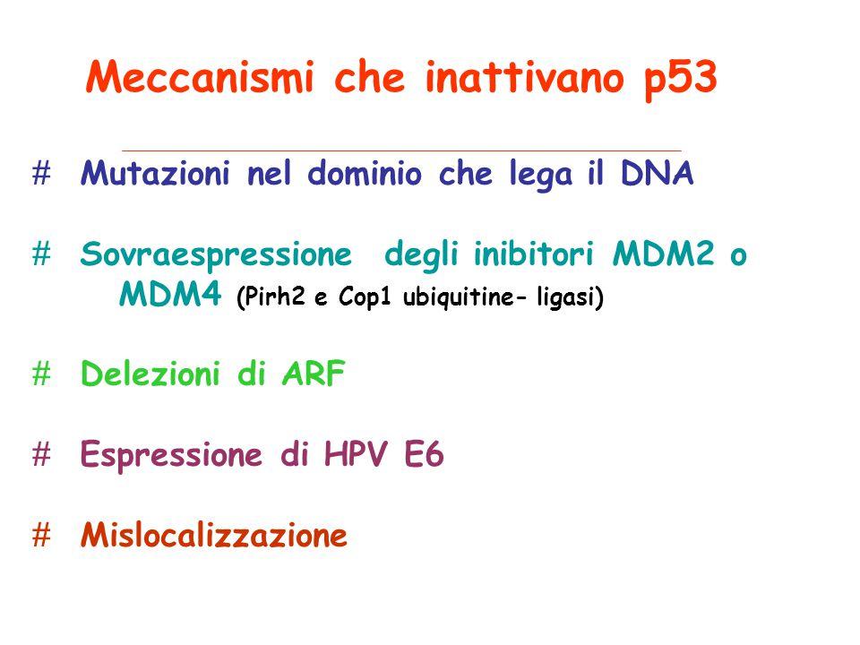 Meccanismi che inattivano p53