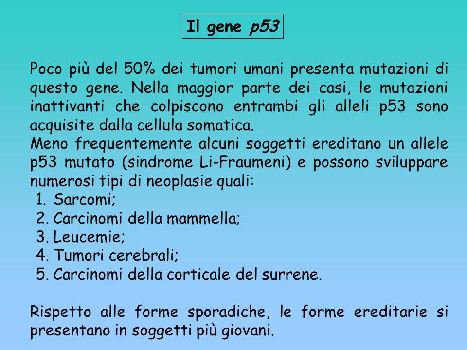 Il gene p53