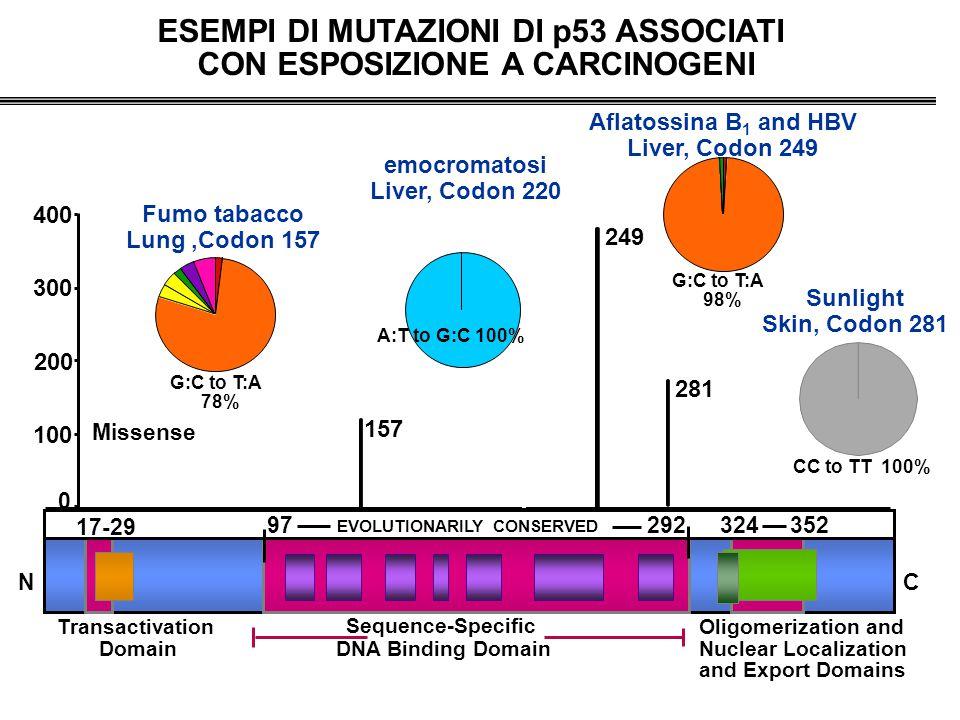 ESEMPI DI MUTAZIONI DI p53 ASSOCIATI CON ESPOSIZIONE A CARCINOGENI