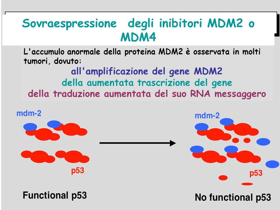 Sovraespressione degli inibitori MDM2 o MDM4