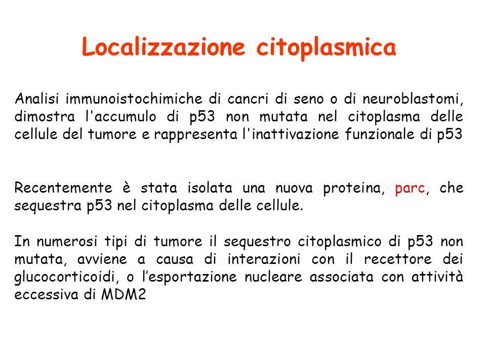 Localizzazione citoplasmica