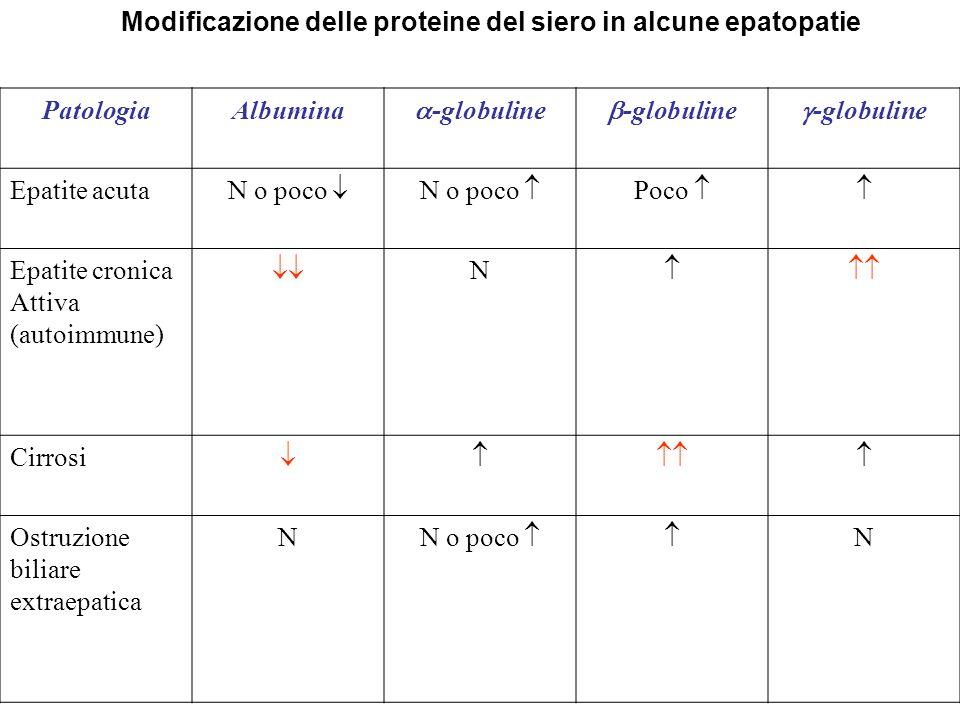 Modificazione delle proteine del siero in alcune epatopatie