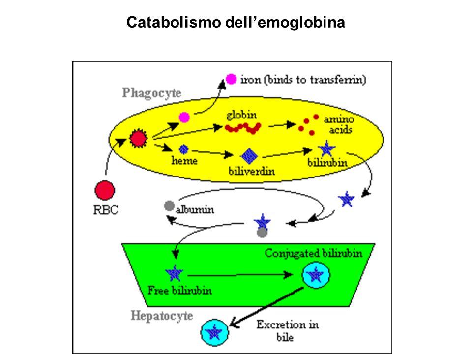 Catabolismo dell'emoglobina