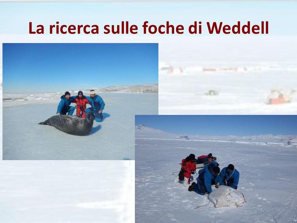 La ricerca sulle foche di Weddell
