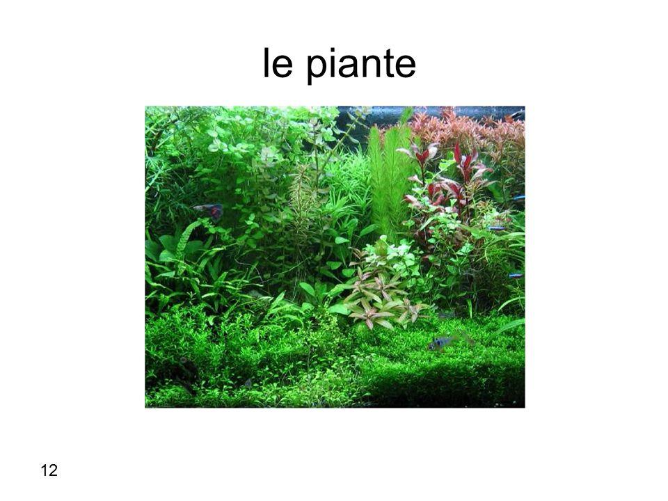le piante 12