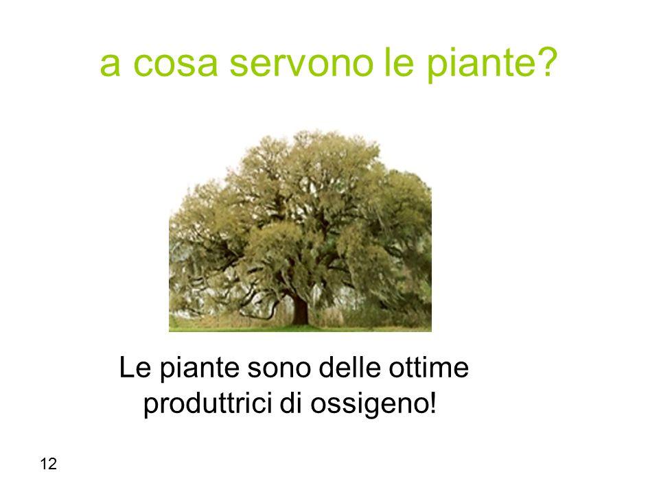 a cosa servono le piante