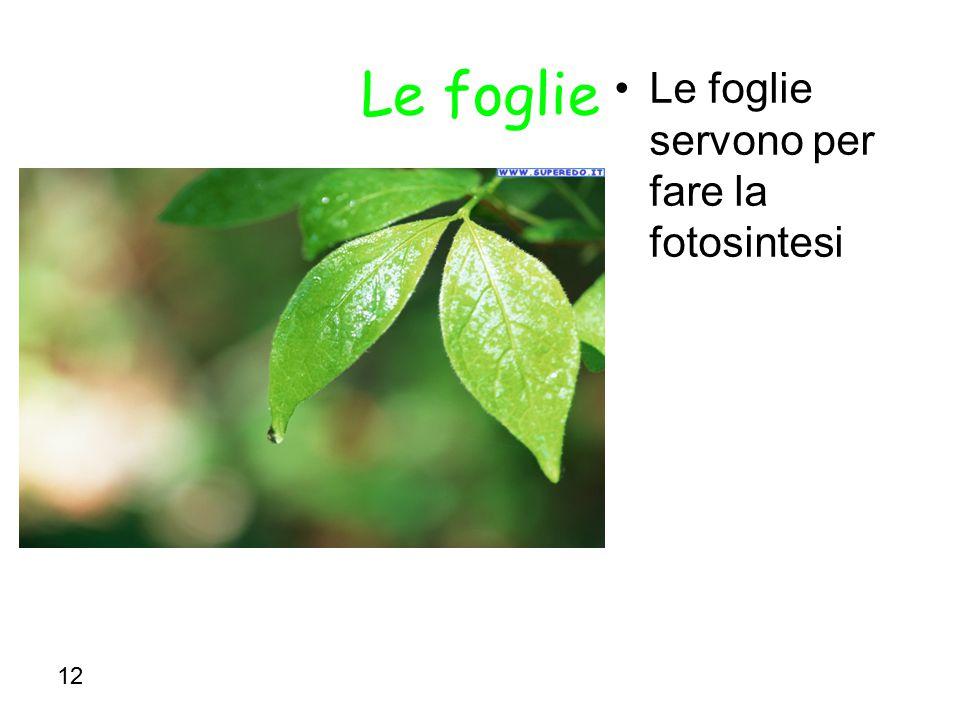Le foglie Le foglie servono per fare la fotosintesi 12
