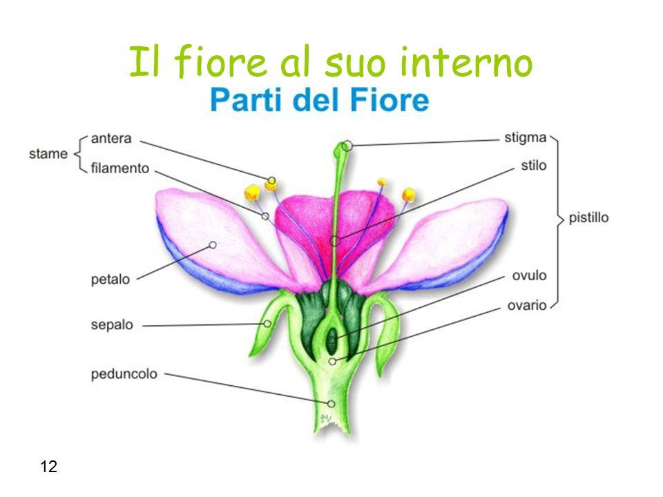 Il fiore al suo interno 12