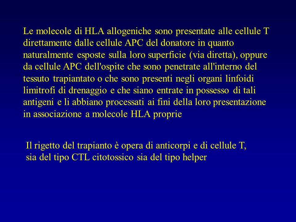 Le molecole di HLA allogeniche sono presentate alle cellule T direttamente dalle cellule APC del donatore in quanto naturalmente esposte sulla loro superficie (via diretta), oppure da cellule APC dell ospite che sono penetrate all interno del tessuto trapiantato o che sono presenti negli organi linfoidi limitrofi di drenaggio e che siano entrate in possesso di tali antigeni e li abbiano processati ai fini della loro presentazione in associazione a molecole HLA proprie