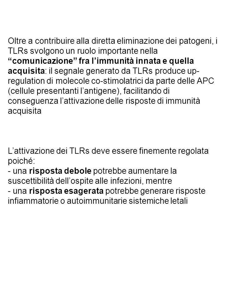 Oltre a contribuire alla diretta eliminazione dei patogeni, i TLRs svolgono un ruolo importante nella comunicazione fra l'immunità innata e quella acquisita: il segnale generato da TLRs produce up-regulation di molecole co-stimolatrici da parte delle APC (cellule presentanti l'antigene), facilitando di conseguenza l'attivazione delle risposte di immunità acquisita