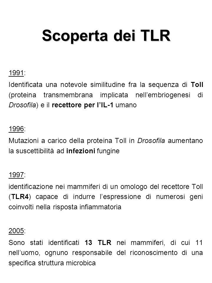 Scoperta dei TLR 1991: