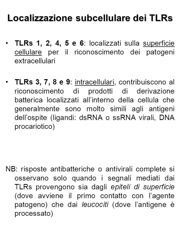 Localizzazione subcellulare dei TLRs