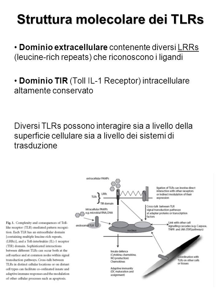 Struttura molecolare dei TLRs