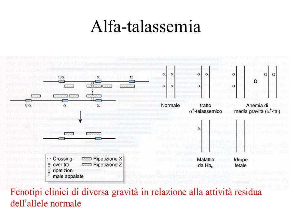 Alfa-talassemia Fenotipi clinici di diversa gravità in relazione alla attività residua dell'allele normale.