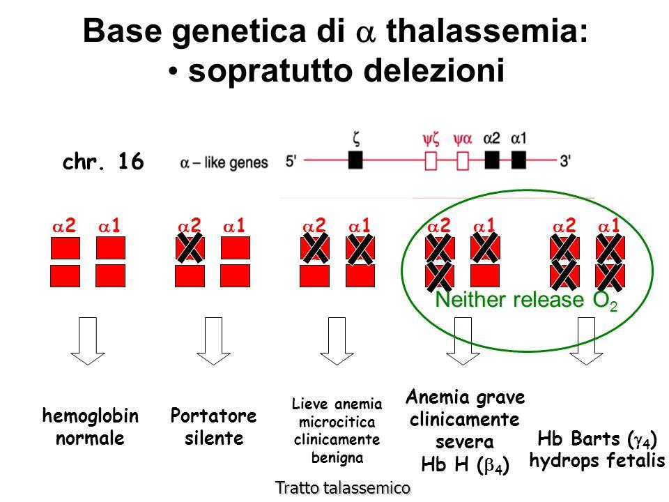 Base genetica di a thalassemia: sopratutto delezioni