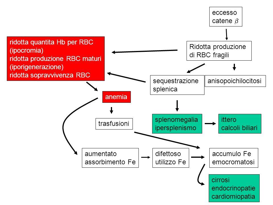 eccesso catene  ridotta quantita Hb per RBC. (ipocromia) ridotta produzione RBC maturi. (iporigenerazione)