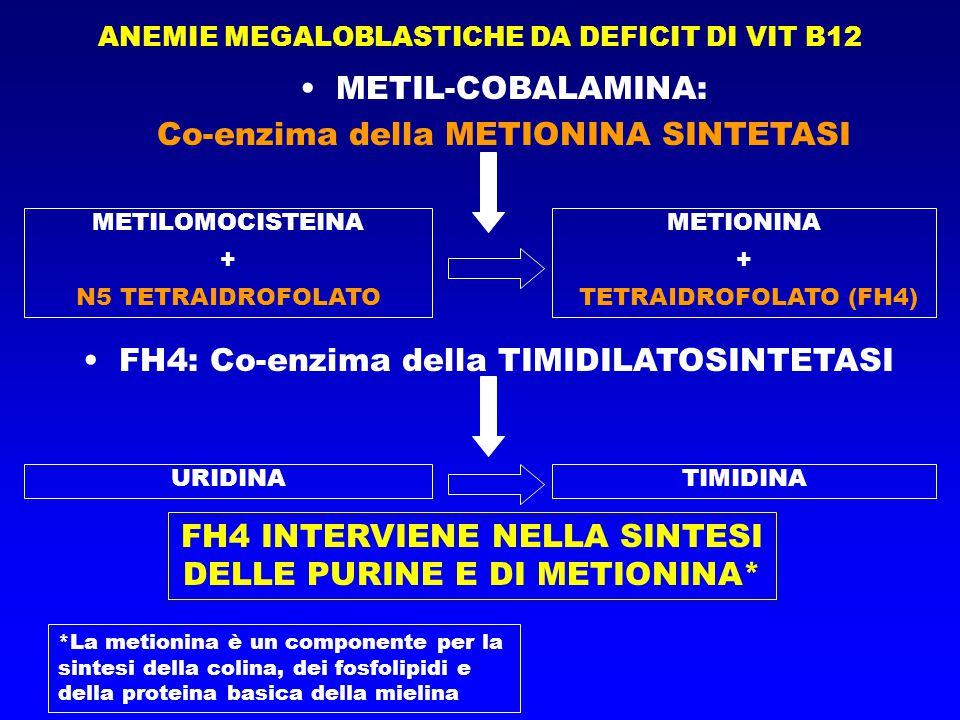 Co-enzima della METIONINA SINTETASI