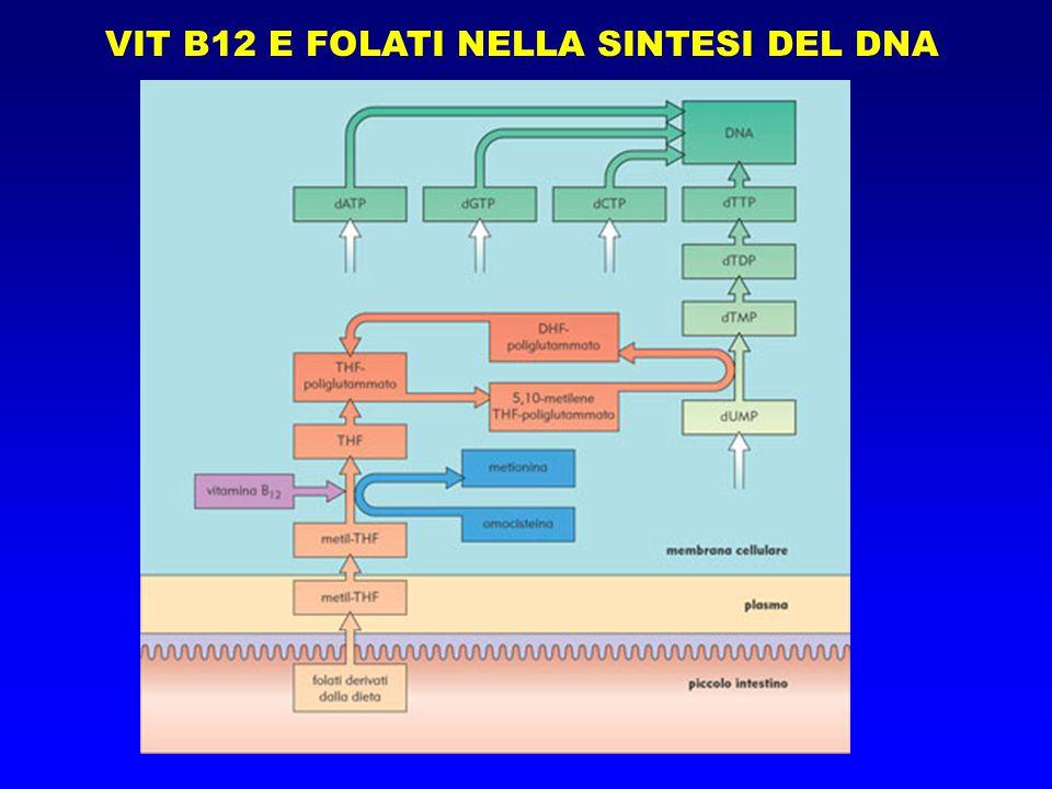 VIT B12 E FOLATI NELLA SINTESI DEL DNA