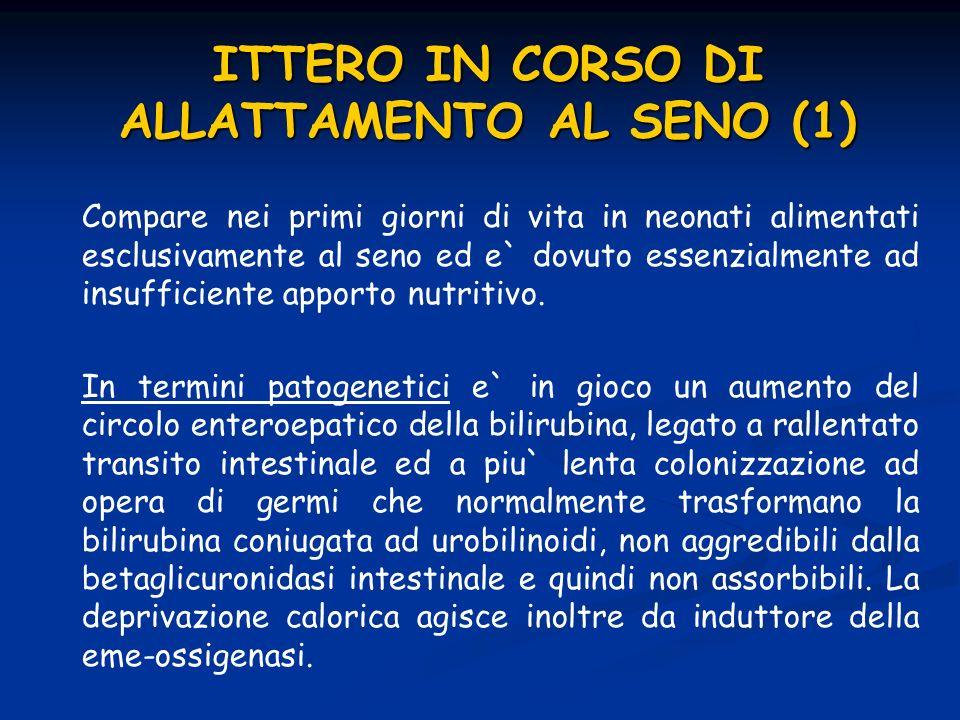 ITTERO IN CORSO DI ALLATTAMENTO AL SENO (1)