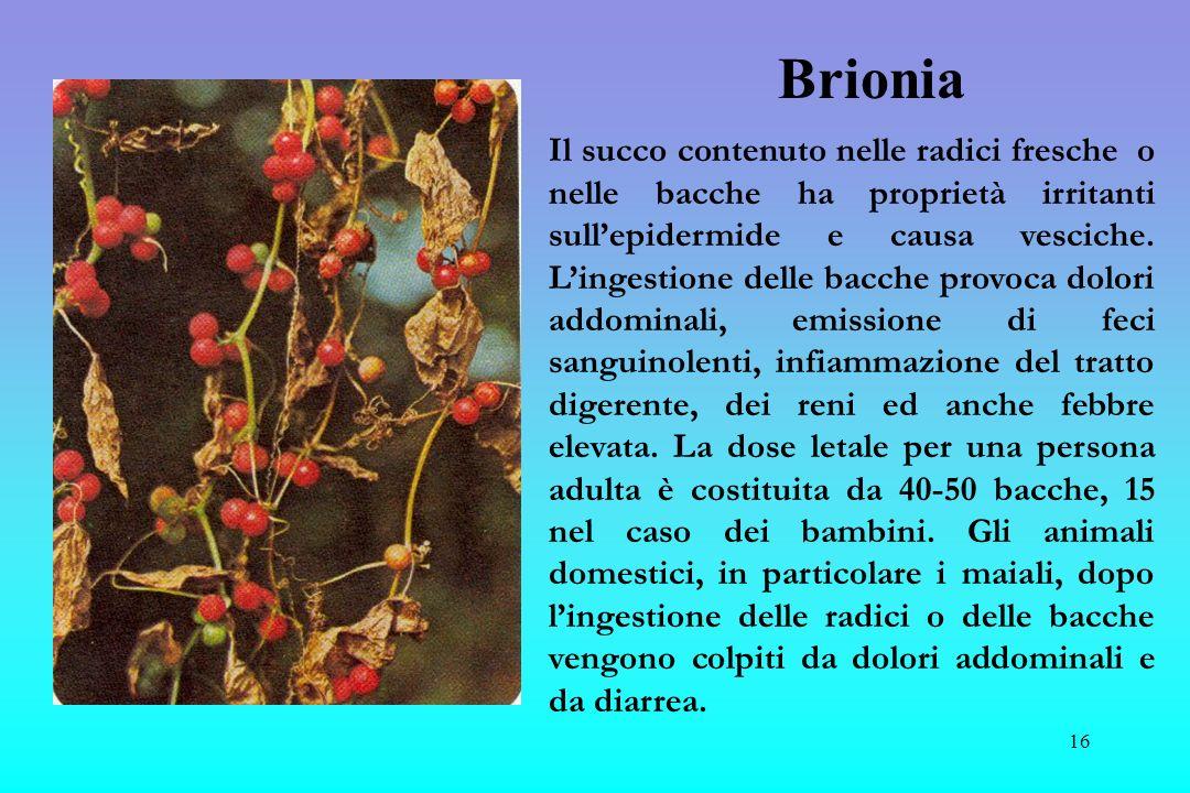 Brionia