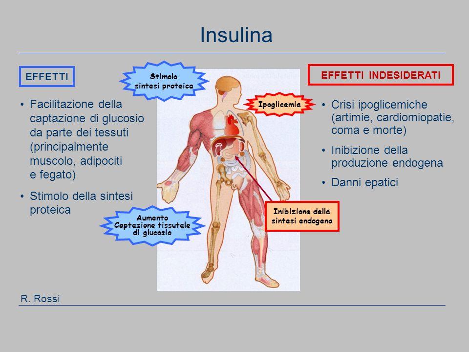 Insulina Stimolo. sintesi proteica. EFFETTI. EFFETTI INDESIDERATI.