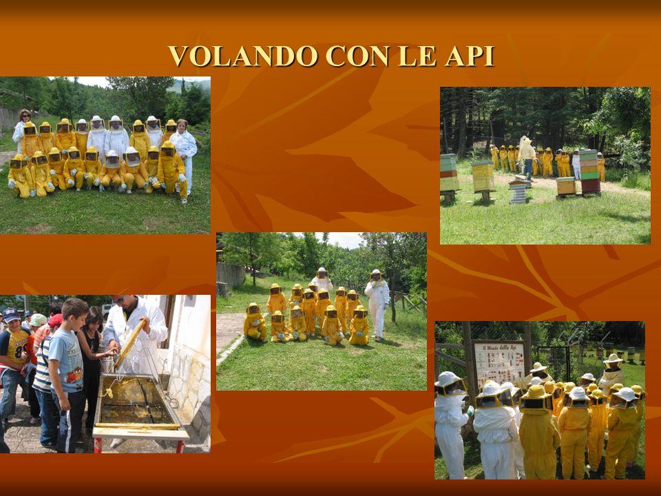 VOLANDO CON LE API