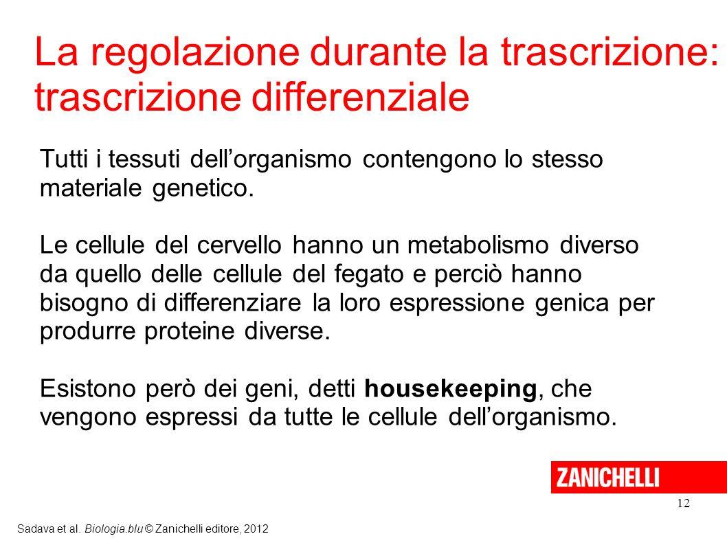 La regolazione durante la trascrizione: trascrizione differenziale