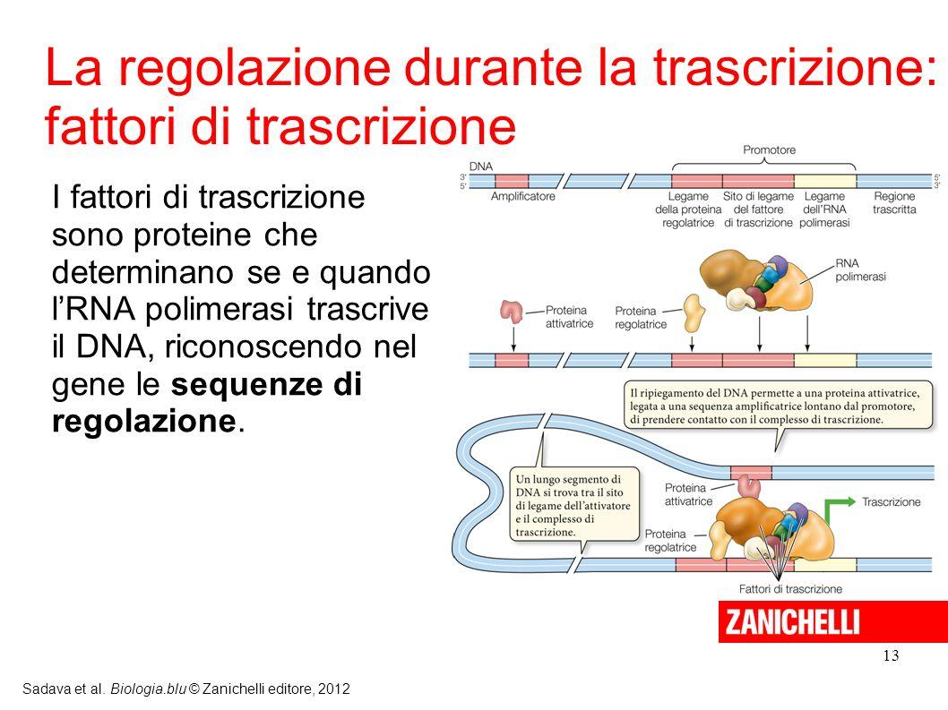 La regolazione durante la trascrizione: fattori di trascrizione