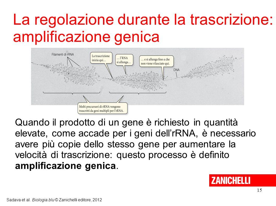 La regolazione durante la trascrizione: amplificazione genica