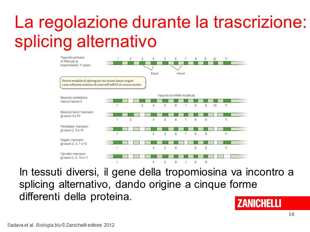 La regolazione durante la trascrizione: splicing alternativo