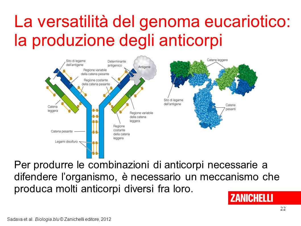 La versatilità del genoma eucariotico: la produzione degli anticorpi