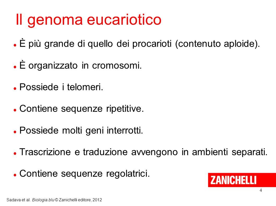 Il genoma eucariotico È più grande di quello dei procarioti (contenuto aploide). È organizzato in cromosomi.