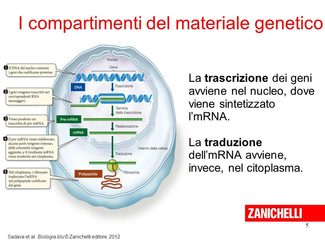 I compartimenti del materiale genetico