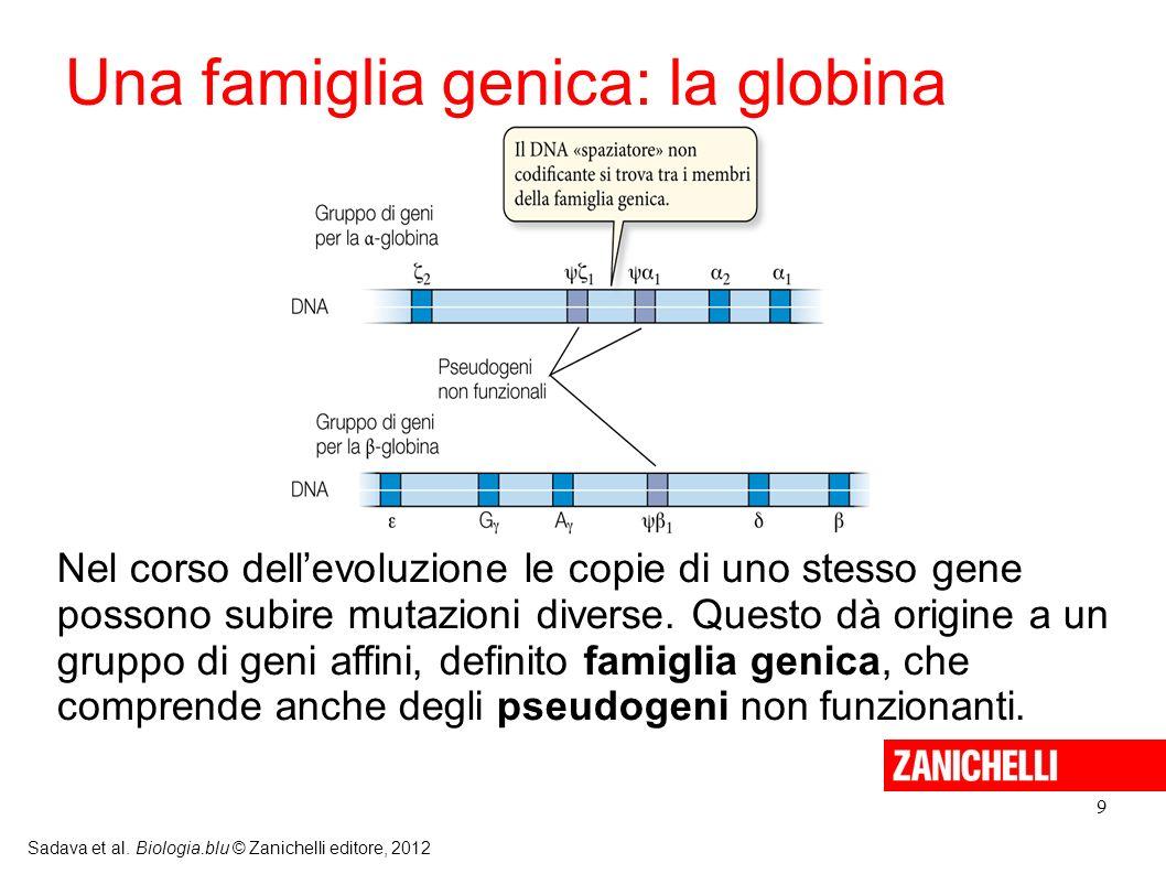 Una famiglia genica: la globina