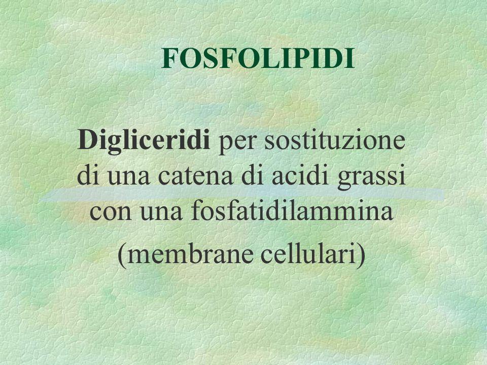 FOSFOLIPIDI Digliceridi per sostituzione di una catena di acidi grassi con una fosfatidilammina.