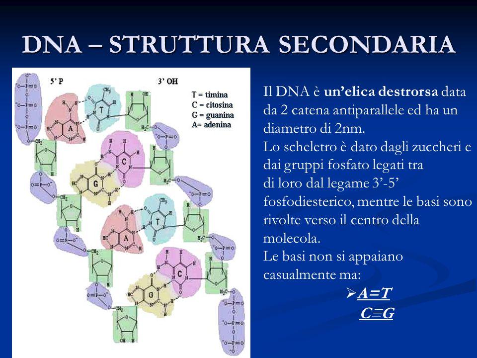 DNA – STRUTTURA SECONDARIA