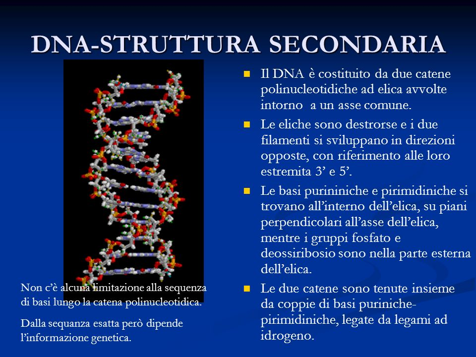 DNA-STRUTTURA SECONDARIA