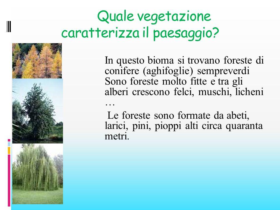 Quale vegetazione caratterizza il paesaggio