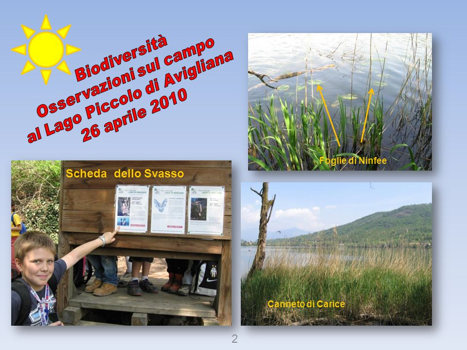 Osservazioni sul campo Biodiversità al Lago Piccolo di Avigliana