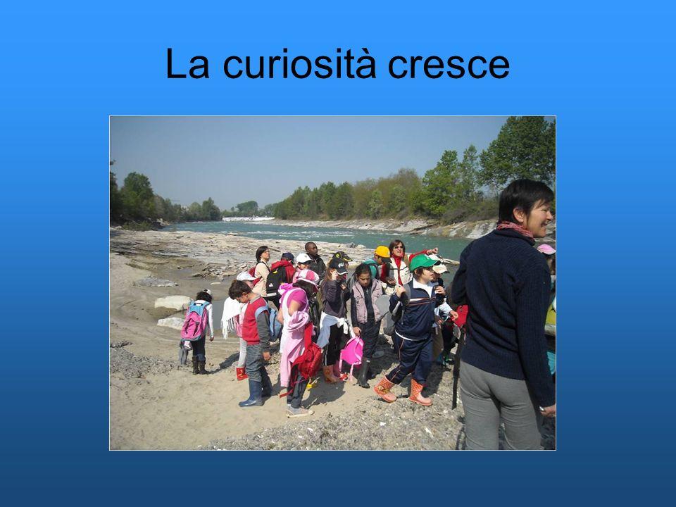 La curiosità cresce