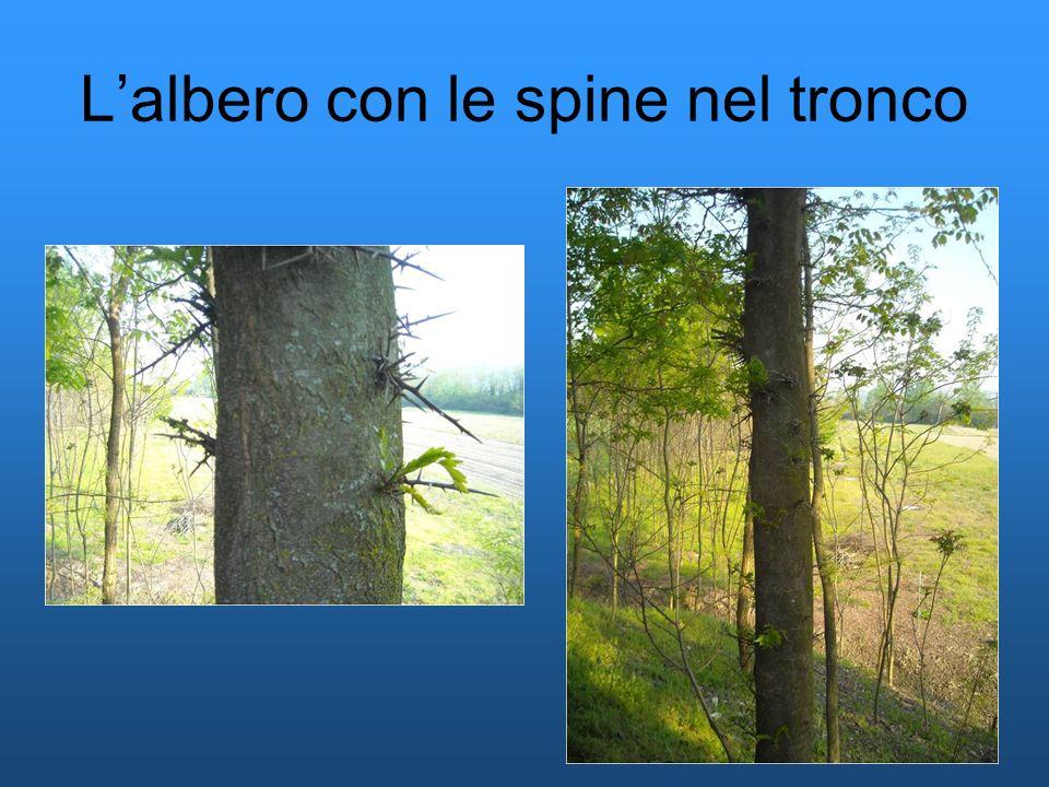 L'albero con le spine nel tronco