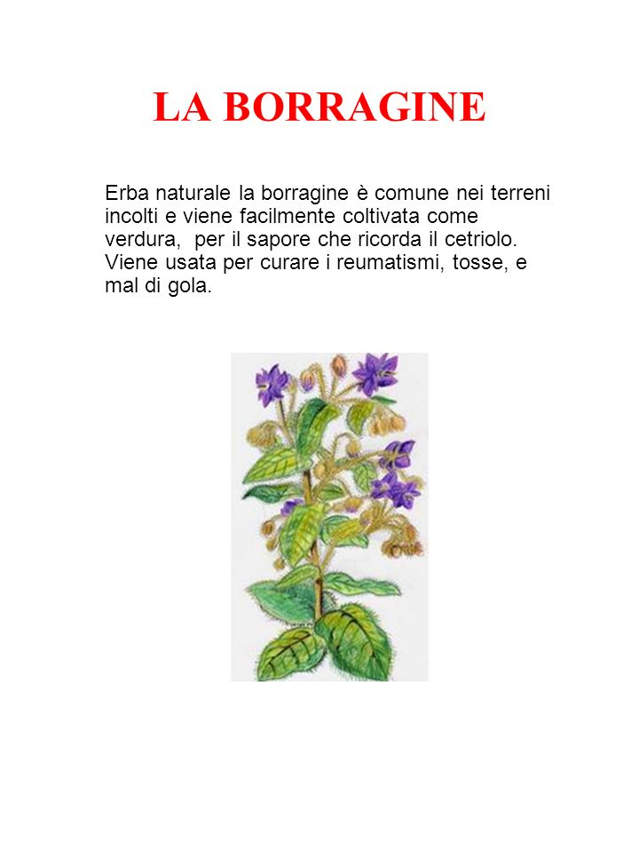 LA BORRAGINE