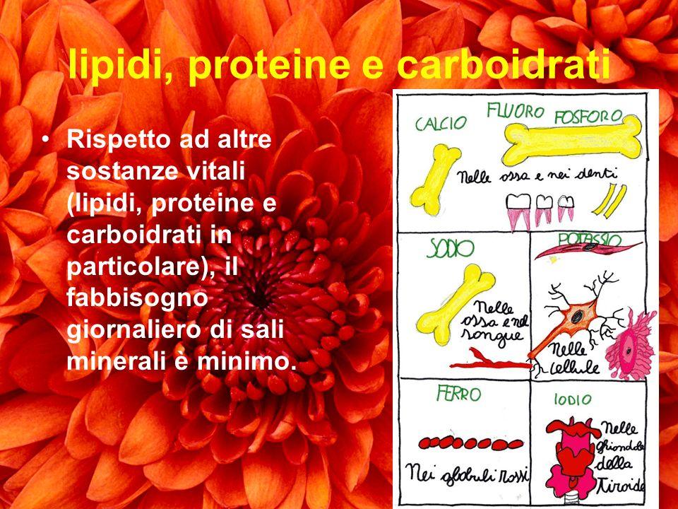 lipidi, proteine e carboidrati